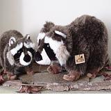 Raccoon - Kosen