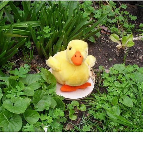 Duckling - Kosen
